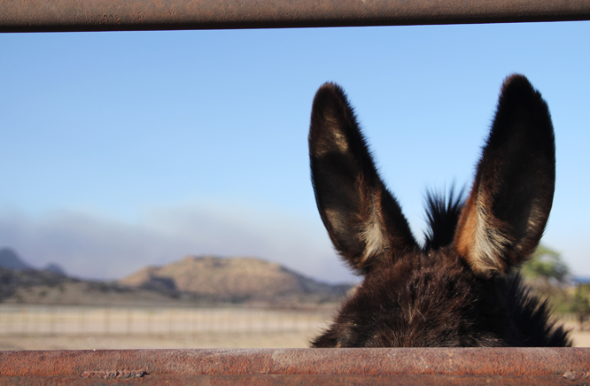 10 2 donkey