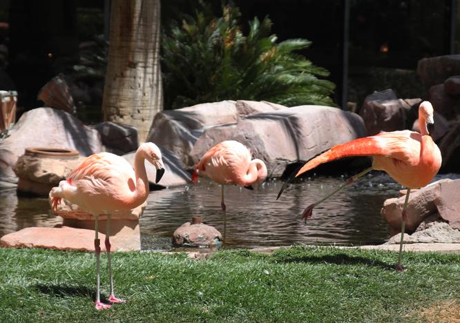 6 flamingos