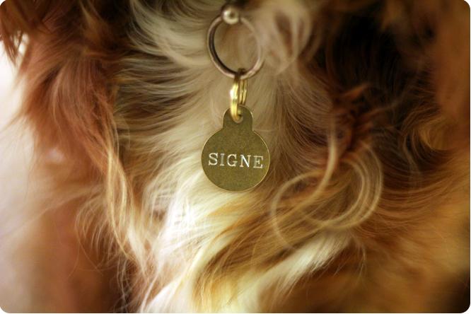 halsband signe